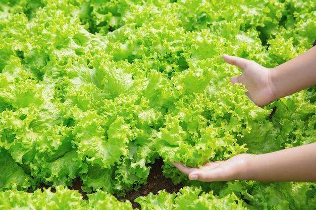 Fechar o agricultor de mão no jardim durante o fundo de comida de manhã Foto gratuita