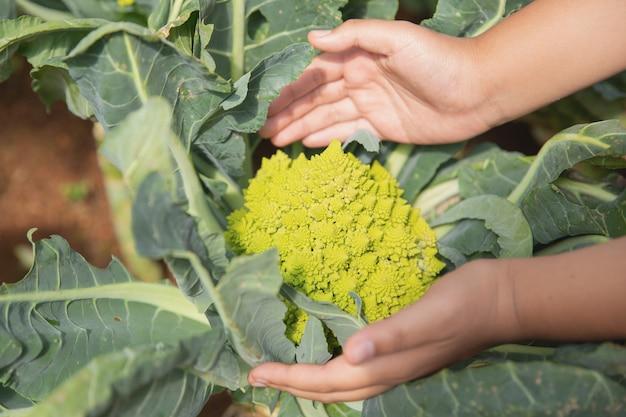 Fechar o agricultor de mão no jardim durante o tempo de manhã Foto gratuita