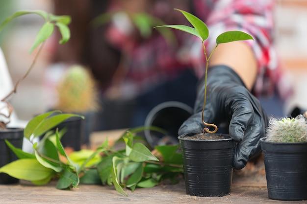 Feche a foto da mão segurando a planta Foto gratuita