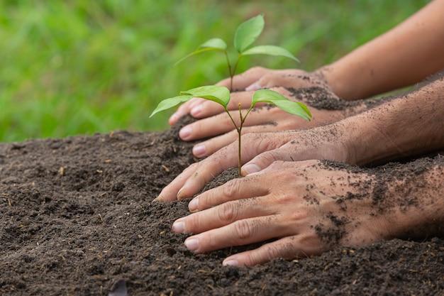 Feche a foto da mão segurando o plantio da muda da planta Foto gratuita
