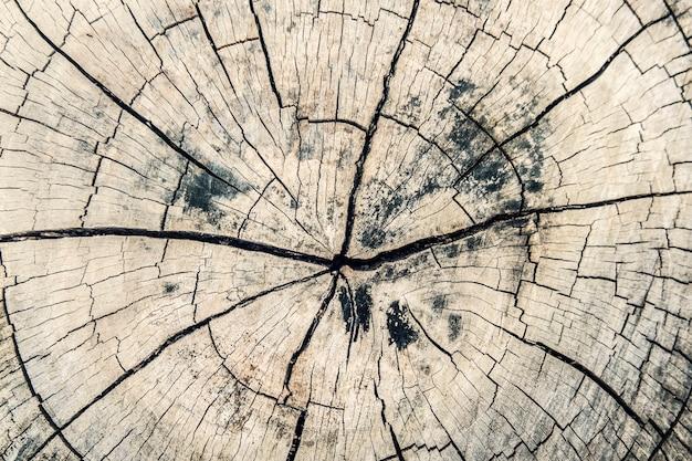 Feche a seção transversal de madeira e a textura ou o fundo do tronco de árvore de marrom escuro antigo. Foto Premium