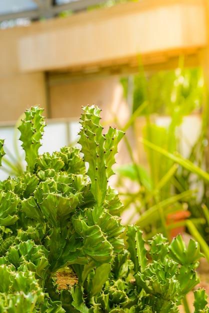 Feche acima da árvore de cacto no jardim Foto Premium
