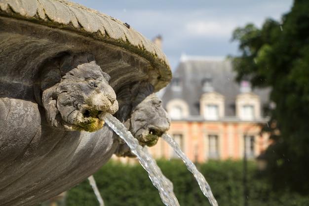Feche acima da bacia da fonte de pedra e boca de uma fonte dourada do leão Foto Premium