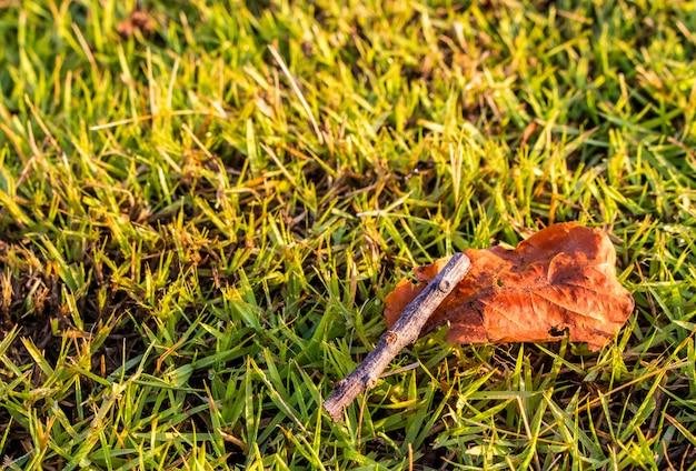 Feche acima da folha seca e do ramo seco no gramado verde no jardim com espaço da cópia. Foto Premium