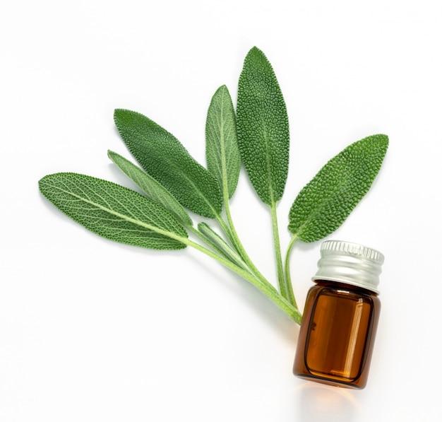 Feche acima da folha verde fresca da erva prudente com uma garrafa do óleo essencial no fundo branco Foto Premium