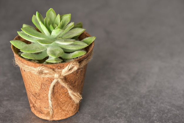 Feche acima da planta verde no potenciômetro de madeira no fundo cinzento com espaço da cópia. Foto Premium