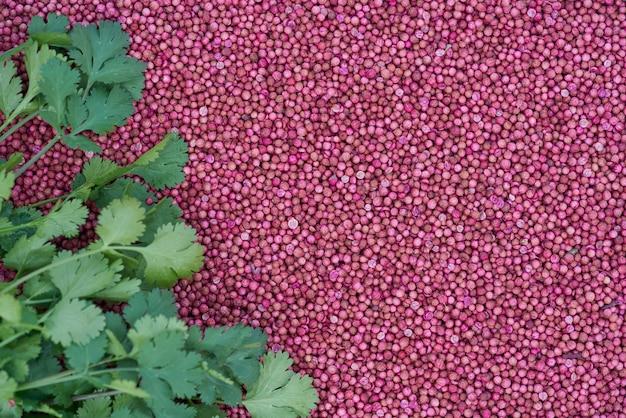Feche acima das folhas do coentro em sementes de coentro secadas. Foto Premium