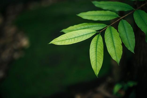 Feche acima das folhas verdes no fundo borrado da folha. Foto gratuita