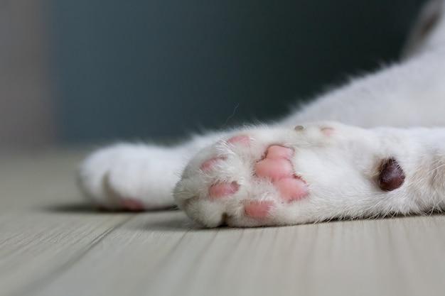 Feche acima das patas de um gato, deite-se em uma mesa de madeira clara com espaço da cópia. Foto Premium