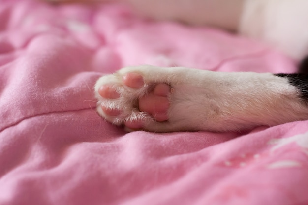 Feche acima das patas de um gato, gato encontram-se para baixo na cama cor-de-rosa. Foto Premium