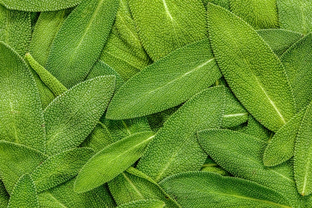 Feche acima de um fundo abstrato da textura da folha prudente da erva Foto Premium