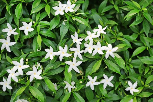 Feche acima do arbusto floral Foto Premium