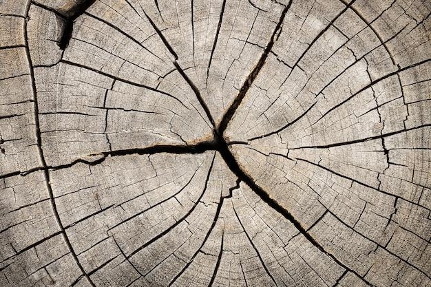 Feche acima do coto de madeira cortado com quebras e anéis anuais como o teste padrão. Foto Premium