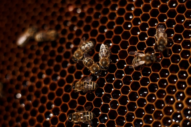 Feche acima do favo de mel na colméia de madeira com abelhas nele. apicultura. Foto Premium