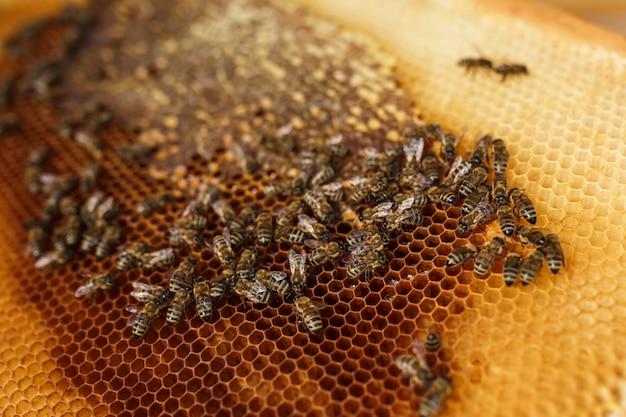 Feche acima do favo de mel no quadro de madeira com abelhas nele. Foto Premium