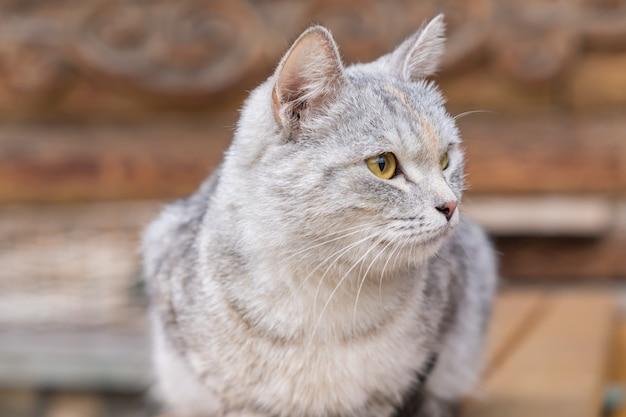 Feche acima do gato cinzento vadio no banco de madeira ao ar livre Foto Premium