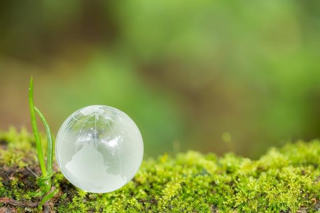 Feche acima do globo de vidro na floresta. Foto gratuita