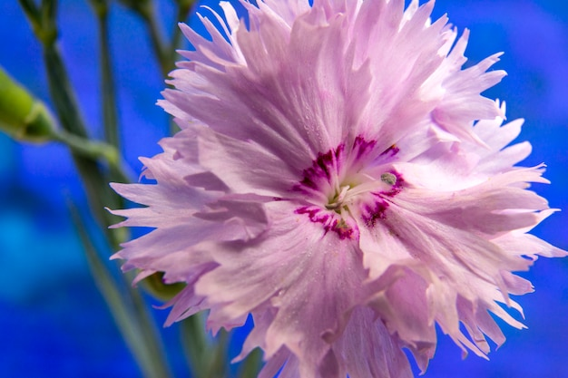 Feche de flor rosa. foto macro. natural. Foto Premium
