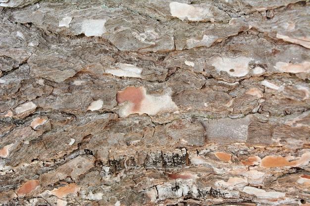 Feche fundos de textura de madeira marrom, textura de casca de árvore de pinho, com fundo de padrões naturais. Foto Premium