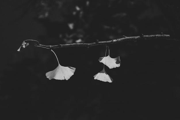 Feche o tiro das folhas no galho com um fundo desfocado em preto e branco Foto gratuita
