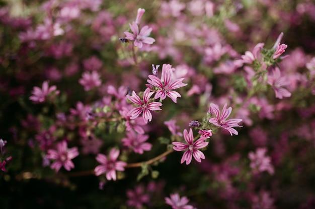 Feche o tiro de luz rosa flores com um desfocado natural Foto gratuita