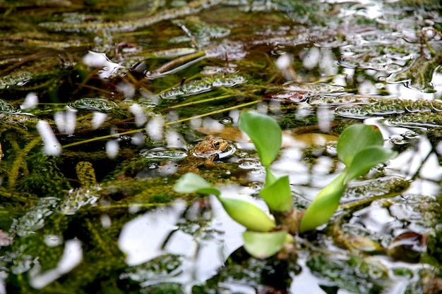 Feche o tiro de plantas verdes na água Foto gratuita