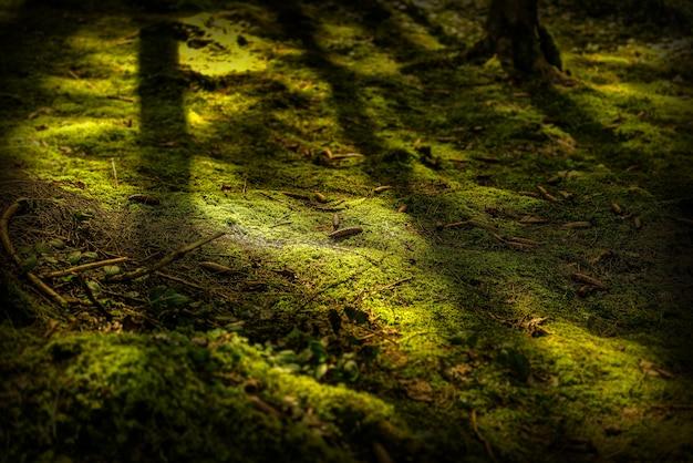Feche o tiro de um chão musgoso com pinhas durante o dia Foto gratuita