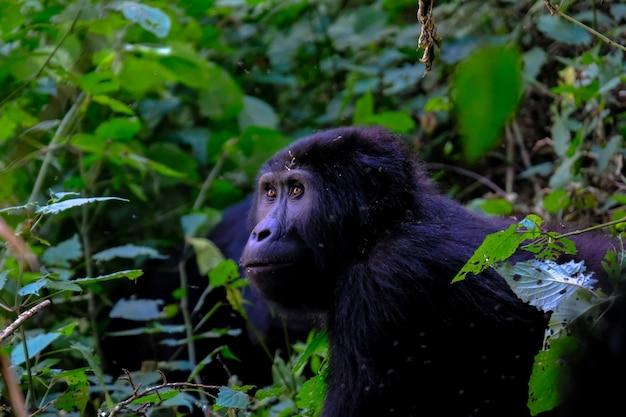 Feche o tiro de um gorila perto de plantas Foto gratuita
