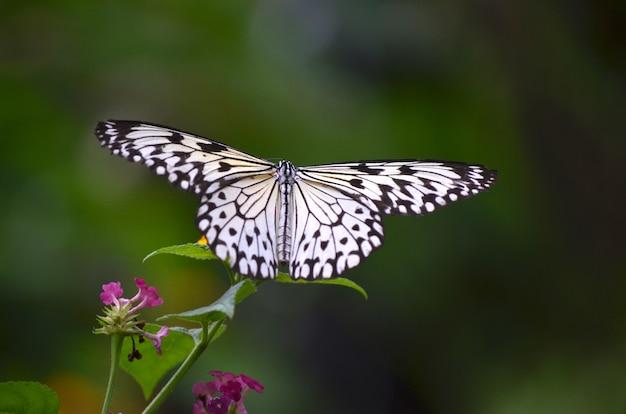 Feche o tiro de uma borboleta branca, sentado em uma planta com um desfocado Foto gratuita