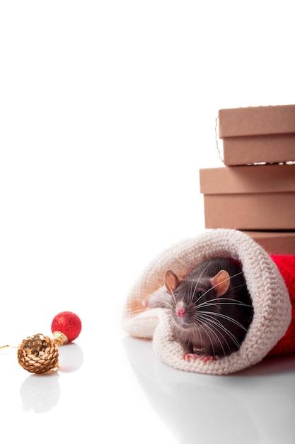 Feliz ano chinês do rato 2020 com rato cinzento escuro com decorações de ano novo Foto Premium
