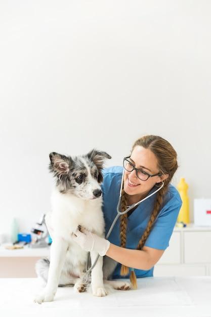 Feliz, femininas, veterinário, examinando, a, cão, com, estetoscópio, ligado, tabela, em, clínica Foto gratuita