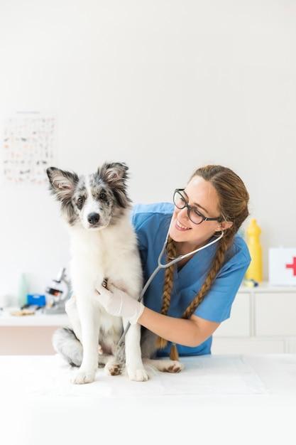 Feliz, femininas, veterinário, examinando, a, cão, com, estetoscópio Foto Premium