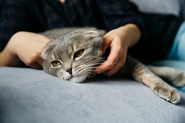Fêmea acariciando gato preguiçoso adorável Foto gratuita