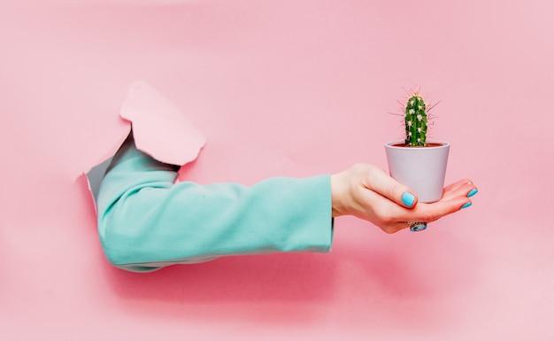 Feminino mão no clássico casaco azul com cactus em pote Foto Premium