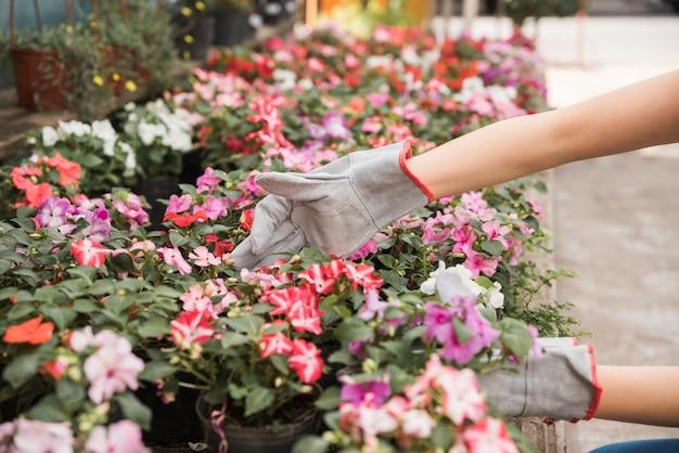 Feminino mão usando luvas de mão, cuidando de belas flores Foto gratuita