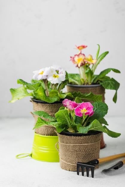 Ferramentas de alto ângulo e vasos de flores Foto gratuita