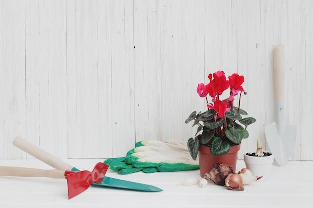 Ferramentas de jardim e ciclâmen vermelho na mesa de madeira branca Foto Premium