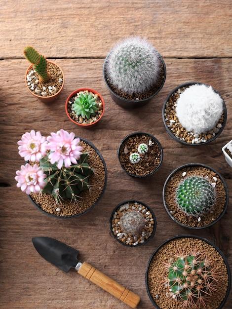 Ferramentas de jardinagem com cactos em fundo de madeira Foto Premium