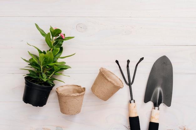 Ferramentas de jardinagem planas e uma planta Foto gratuita