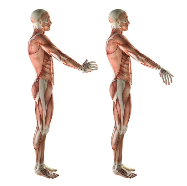 Figura 3d médica mostrando desvio radial do punho e desvio ulnar Foto gratuita