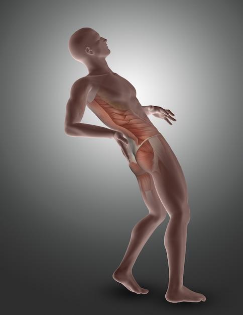 Figura masculina 3d com os músculos traseiros destacados Foto gratuita