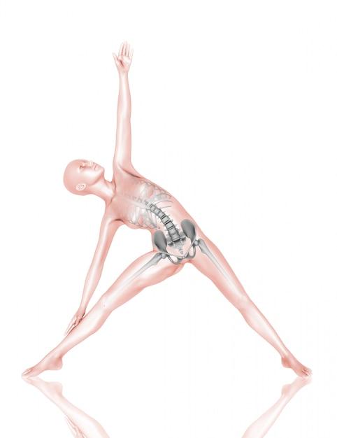 Figura médica feminina 3d com esqueleto em pose de ioga Foto gratuita