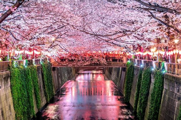 Fileiras de cerejeiras ao longo do rio meguro em tóquio, japão Foto gratuita