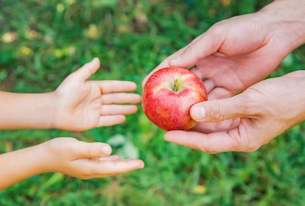Filha e pai coletam maçãs no jardim Foto Premium