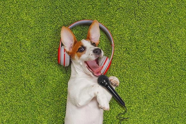 Filhote cachorro, mentindo, ligado, tapete verde Foto Premium