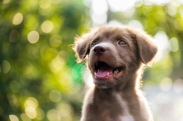 Filhote de cachorro bonito com fundo natural bokeh Foto Premium