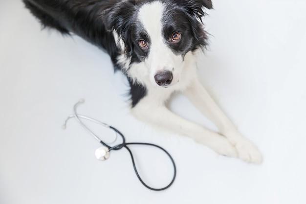 Filhote de cachorro border collie e estetoscópio isolado no branco Foto Premium