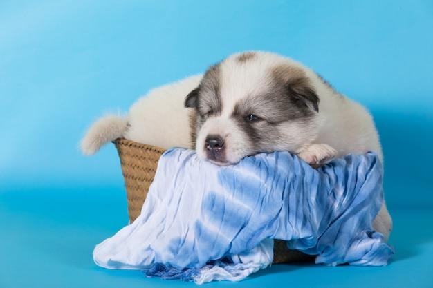 Filhote de cachorro dormir na cesta de madeira Foto Premium
