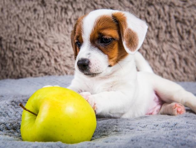 Cachorro pode comer maçã? Descubra!