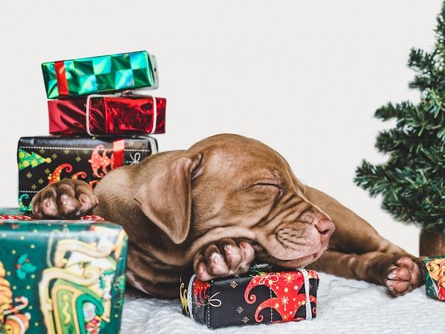 Filhote de cachorro jovem e encantador e uma caixa festiva Foto Premium